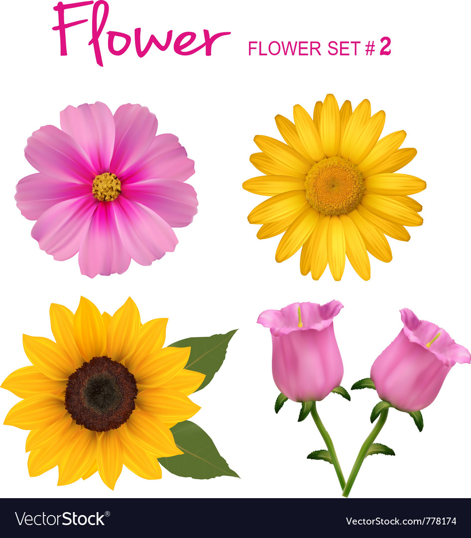 Colorful flowers vector | Price: 1 Credit (USD $1)