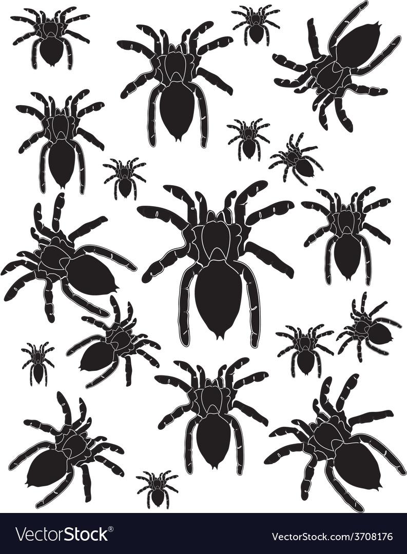 Set spider silhouette vector | Price: 1 Credit (USD $1)