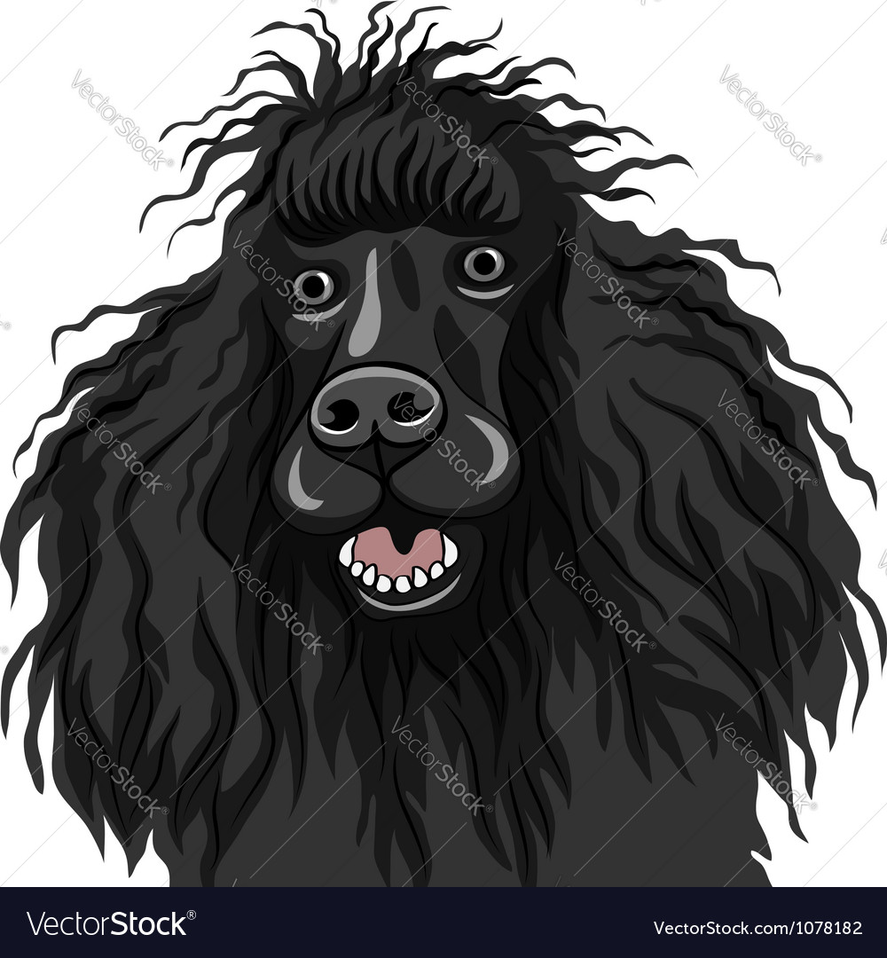 Black dog poodle breed smiles vector | Price: 1 Credit (USD $1)