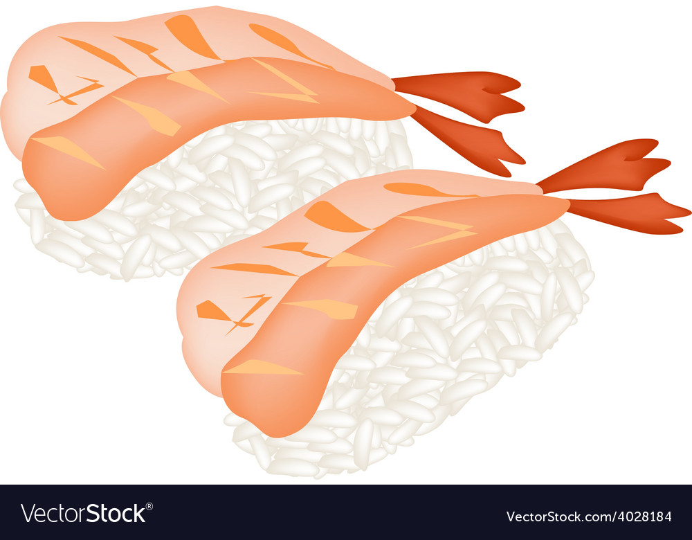Ebi sushi or shrimp nigiri on white background vector | Price: 1 Credit (USD $1)