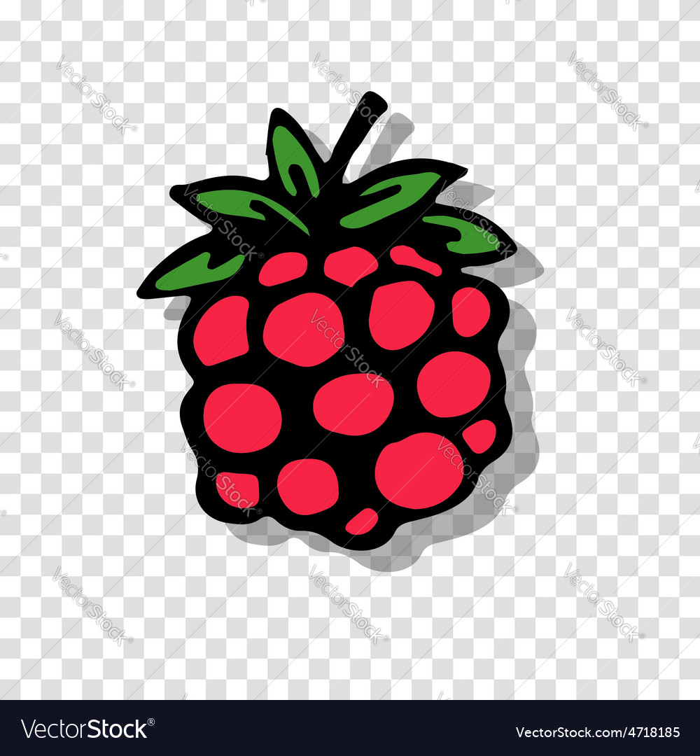 Raspberry sketch on transparent background for vector | Price: 1 Credit (USD $1)