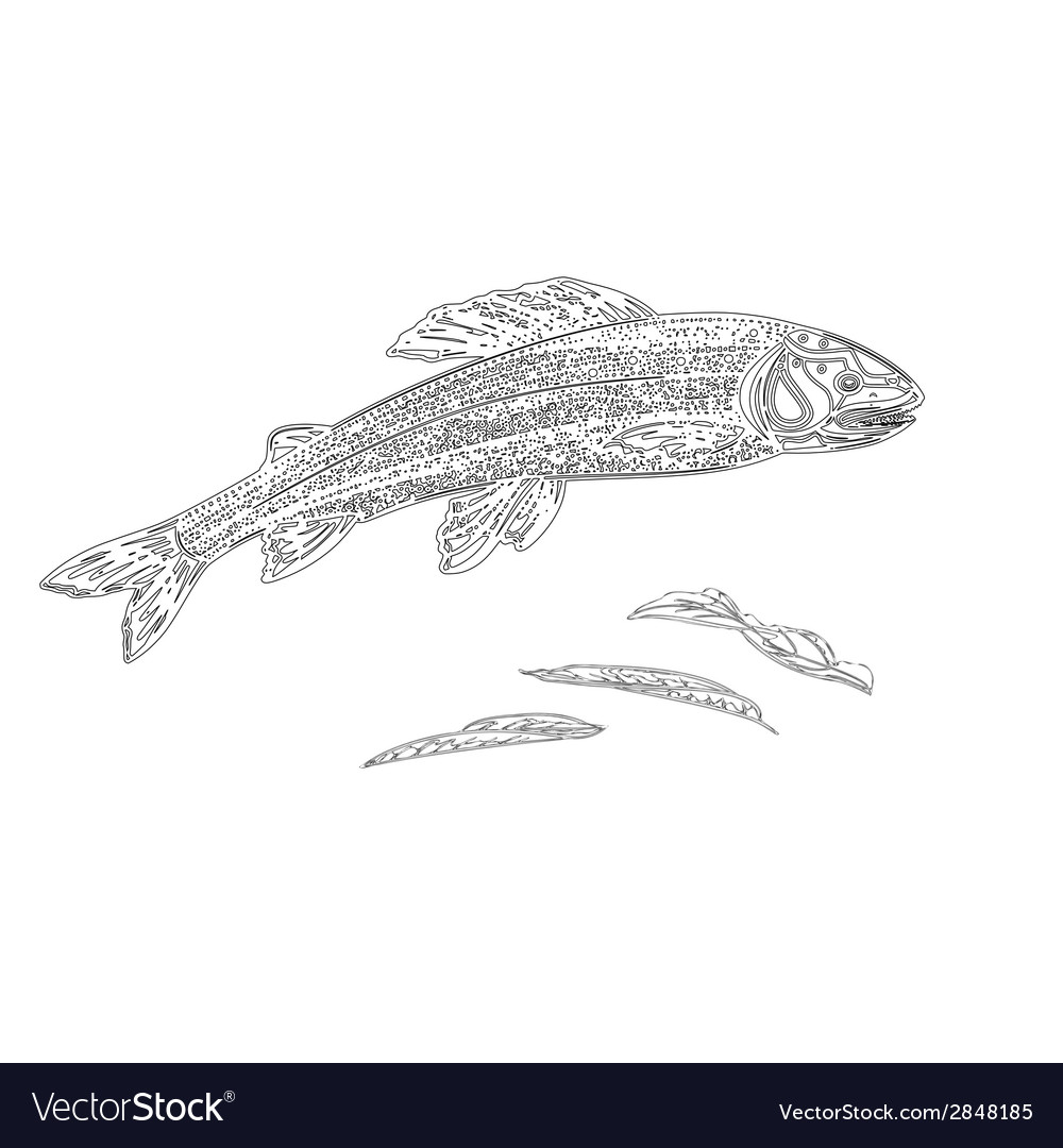 Trout as vintage engraved black vector | Price: 1 Credit (USD $1)