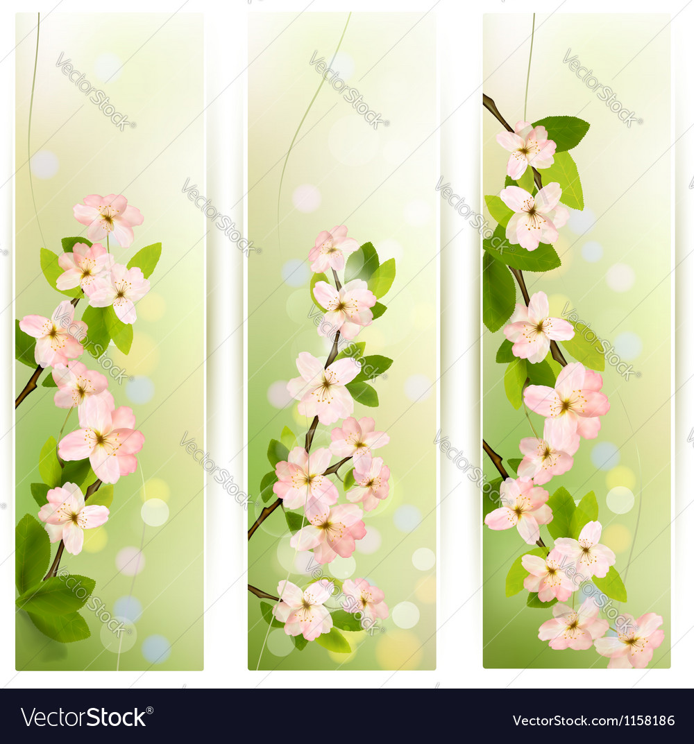 Three nature banners with blossoming tree brunch vector | Price: 1 Credit (USD $1)