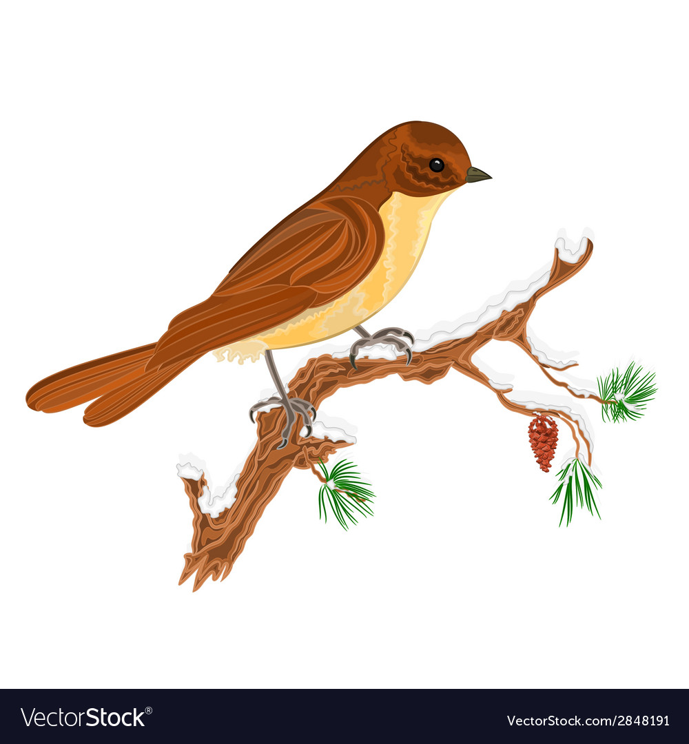 Bird on a branch of pine christmas motive vector | Price: 1 Credit (USD $1)