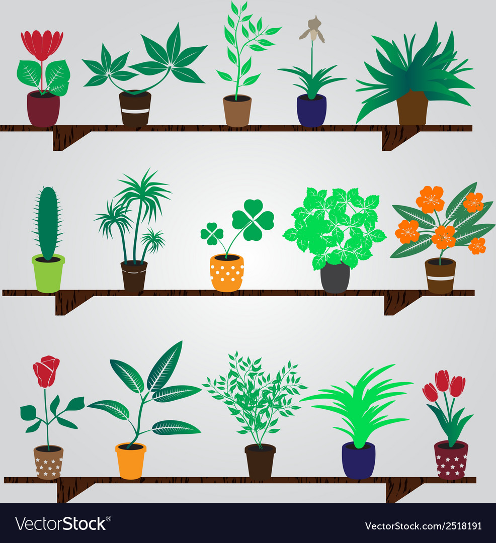 Home houseplants and flowers in pot on the shelf vector | Price: 1 Credit (USD $1)