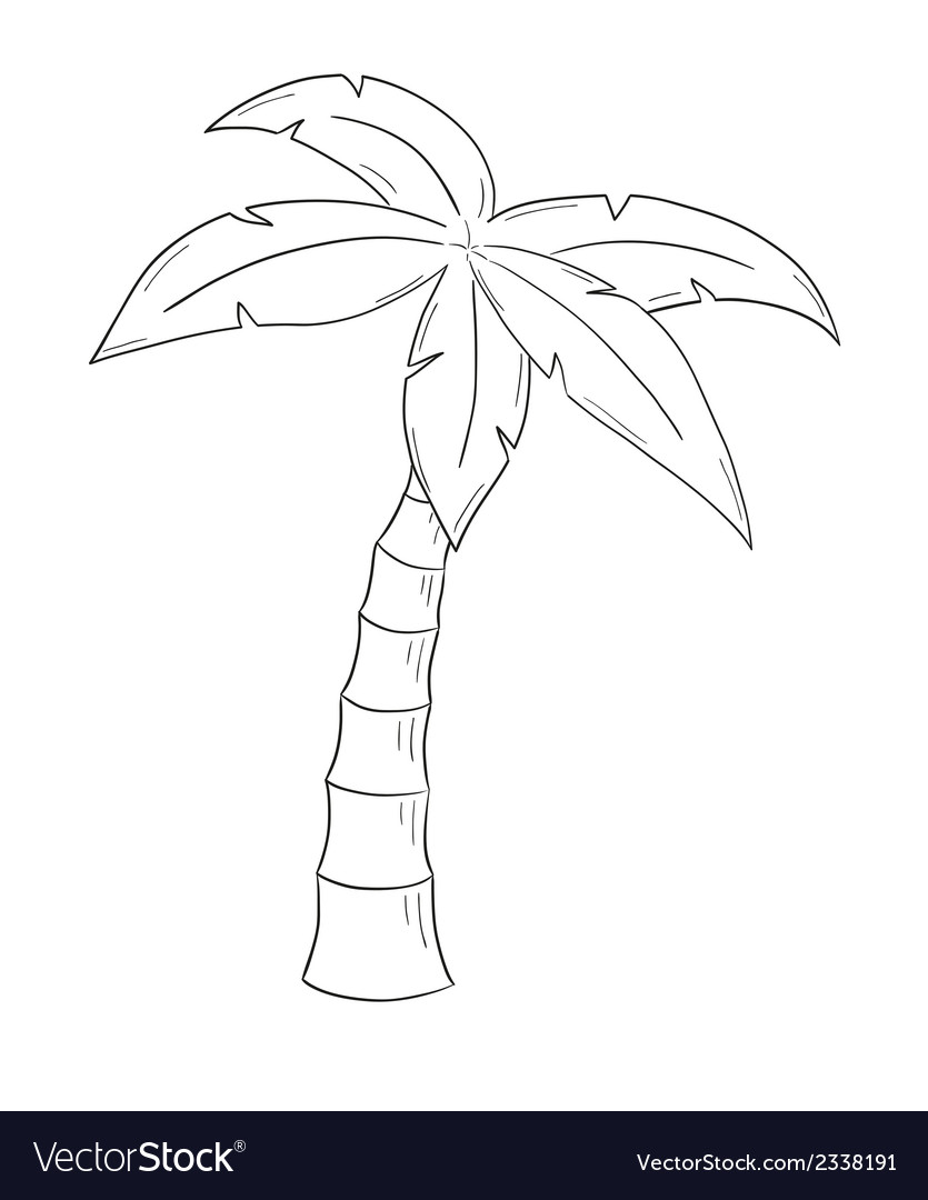 Sketch of the palm tree vector | Price: 1 Credit (USD $1)