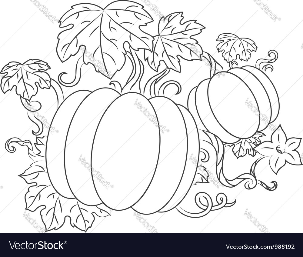 Pumpkins vegetables vector | Price: 1 Credit (USD $1)