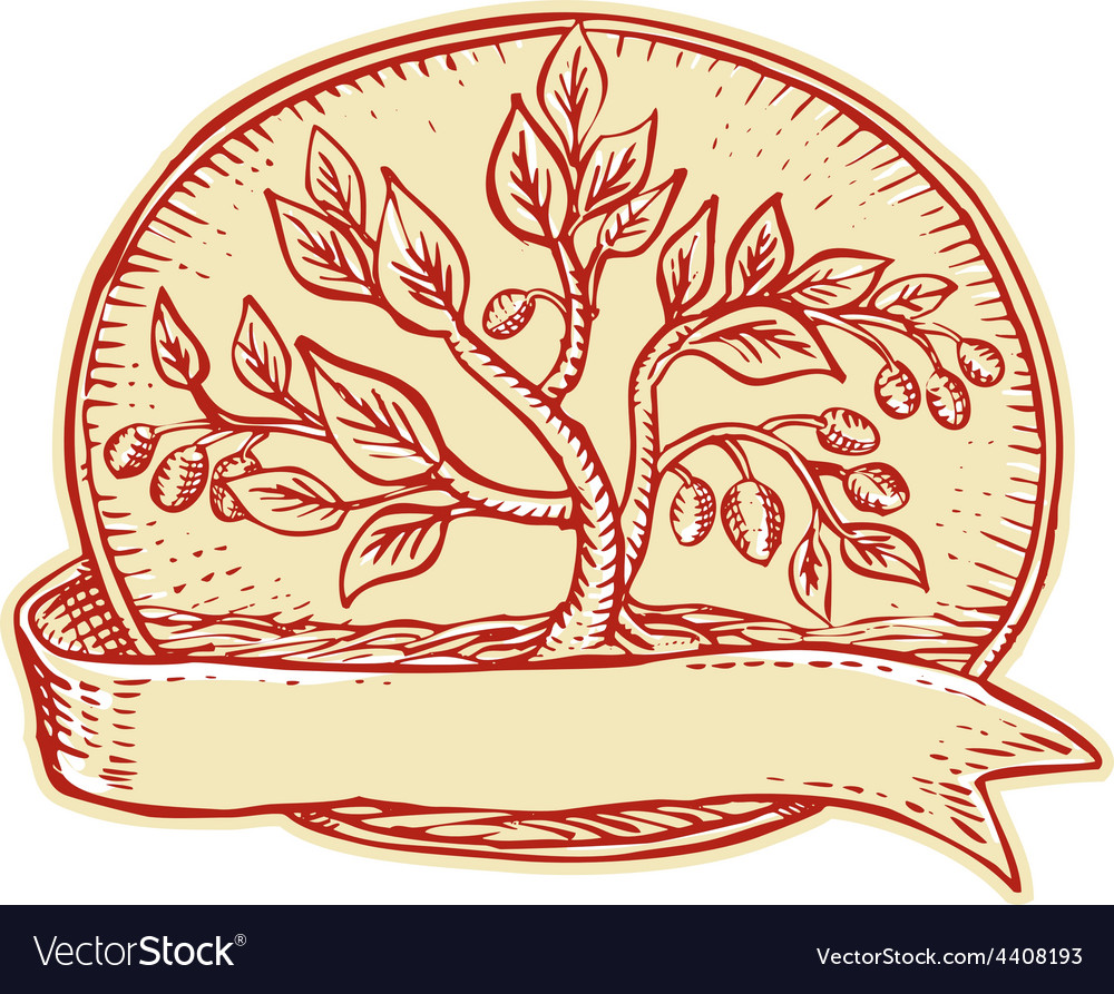 Olive tree ribbon oval etching vector | Price: 1 Credit (USD $1)