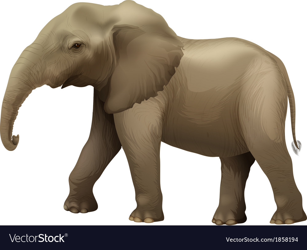 African elephant vector | Price: 1 Credit (USD $1)