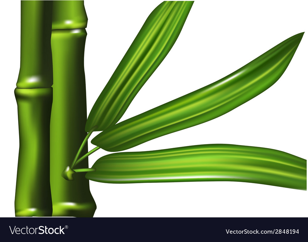 Bamboo isolated vector | Price: 1 Credit (USD $1)