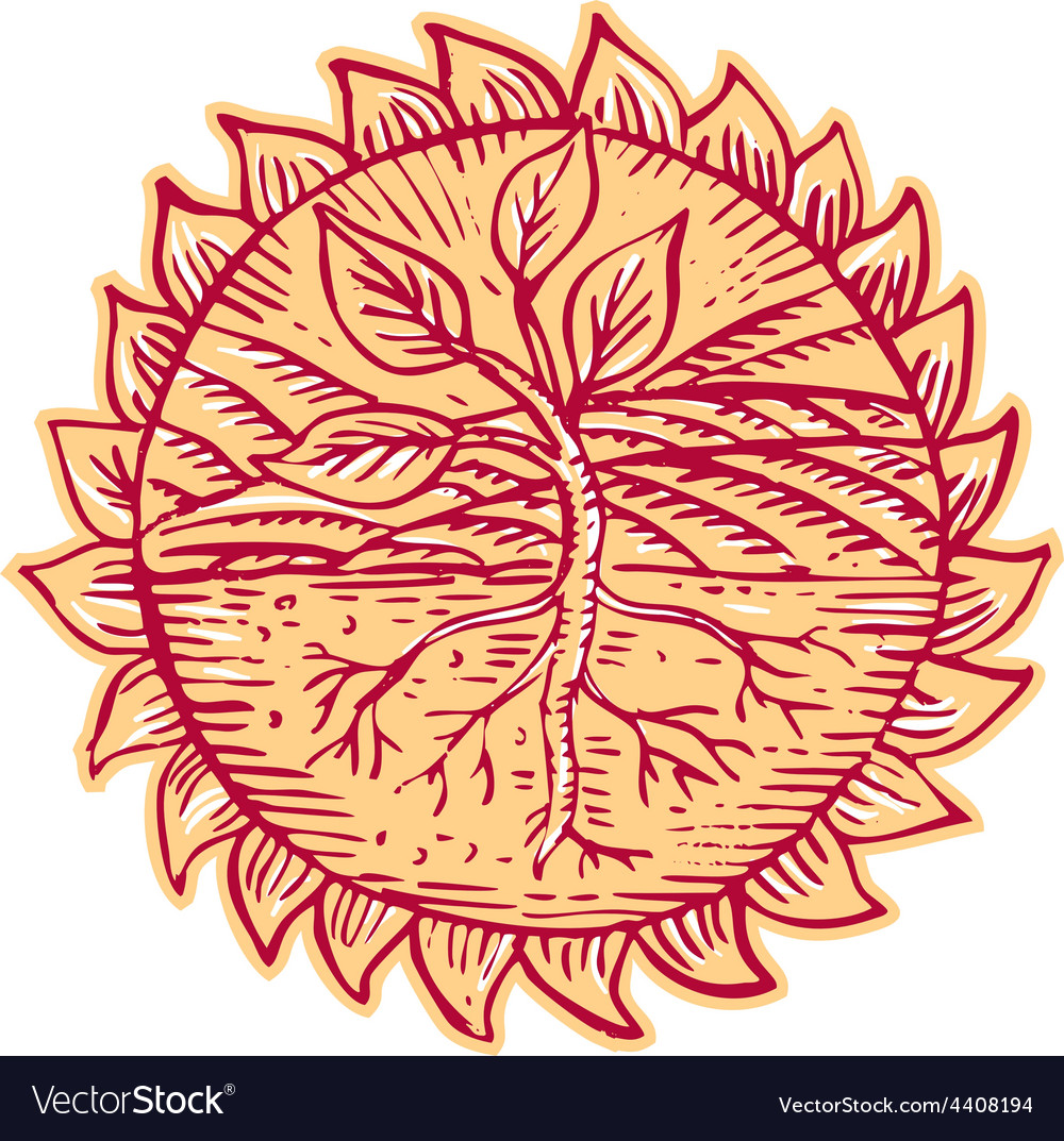Plant roots field sun etching vector | Price: 1 Credit (USD $1)