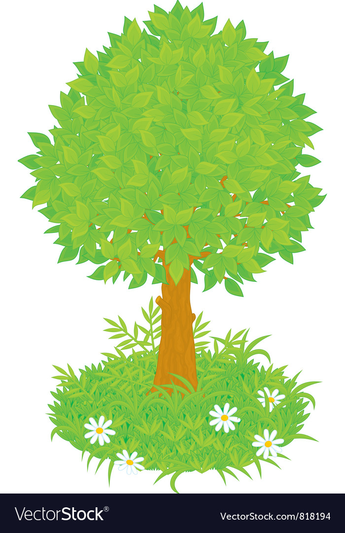 Tree vector | Price: 3 Credit (USD $3)