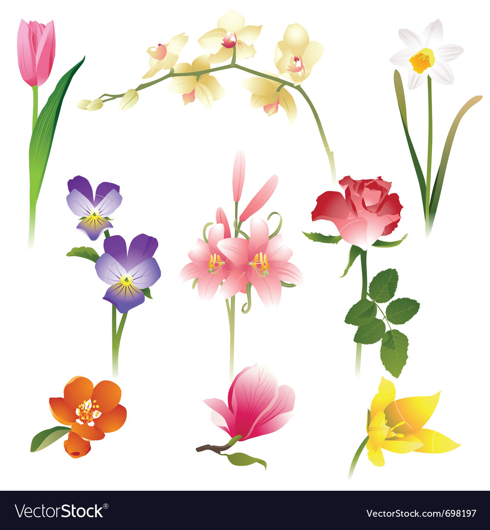 9 realistic flowers icons vector | Price: 1 Credit (USD $1)