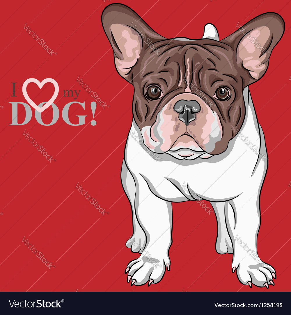 Dog french bulldog breed vector | Price: 3 Credit (USD $3)