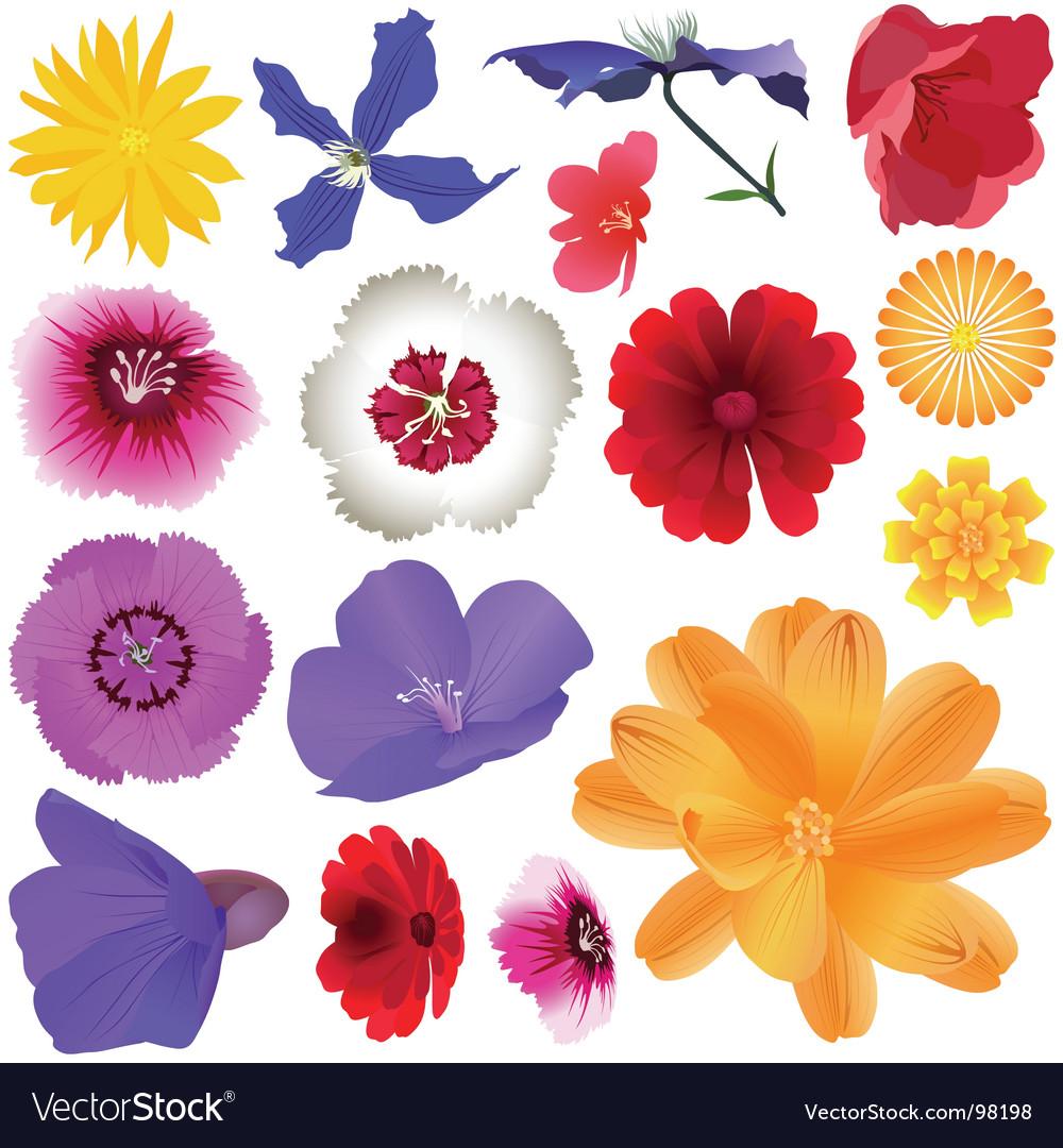 Garden flowers vector | Price: 3 Credit (USD $3)