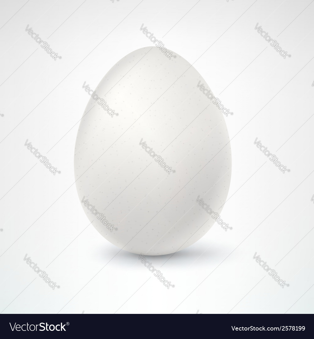Egg isolated on white background vector | Price: 1 Credit (USD $1)