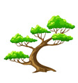 N vector tree bansai with white background vector
