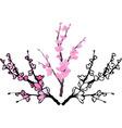 Sakura three variants vector