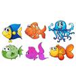 Five different kinds of sea creatures vector