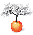 Apple tree from fruit vector