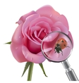 Ladybug is under the magnifying glass on rose vector