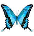 Beautiful isolated blue butterfly vector