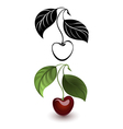 Red and black cherry vector