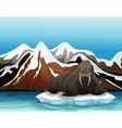 A walrus vector