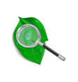 Magnifying glass with green leaves and waterdrops vector