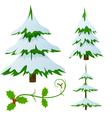 Snow covered fir trees vector