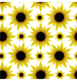 Seamless texture with sunflowers vector