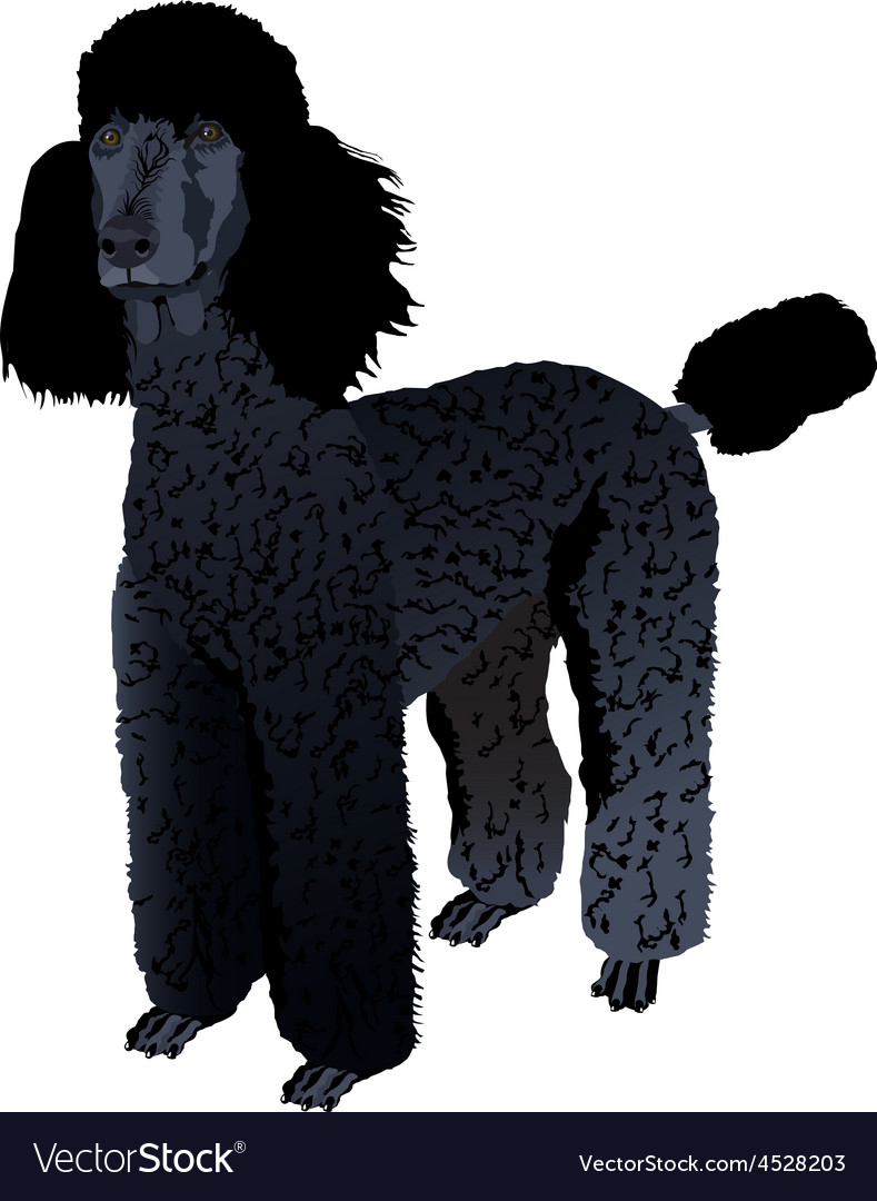 Black poodle vector | Price: 1 Credit (USD $1)