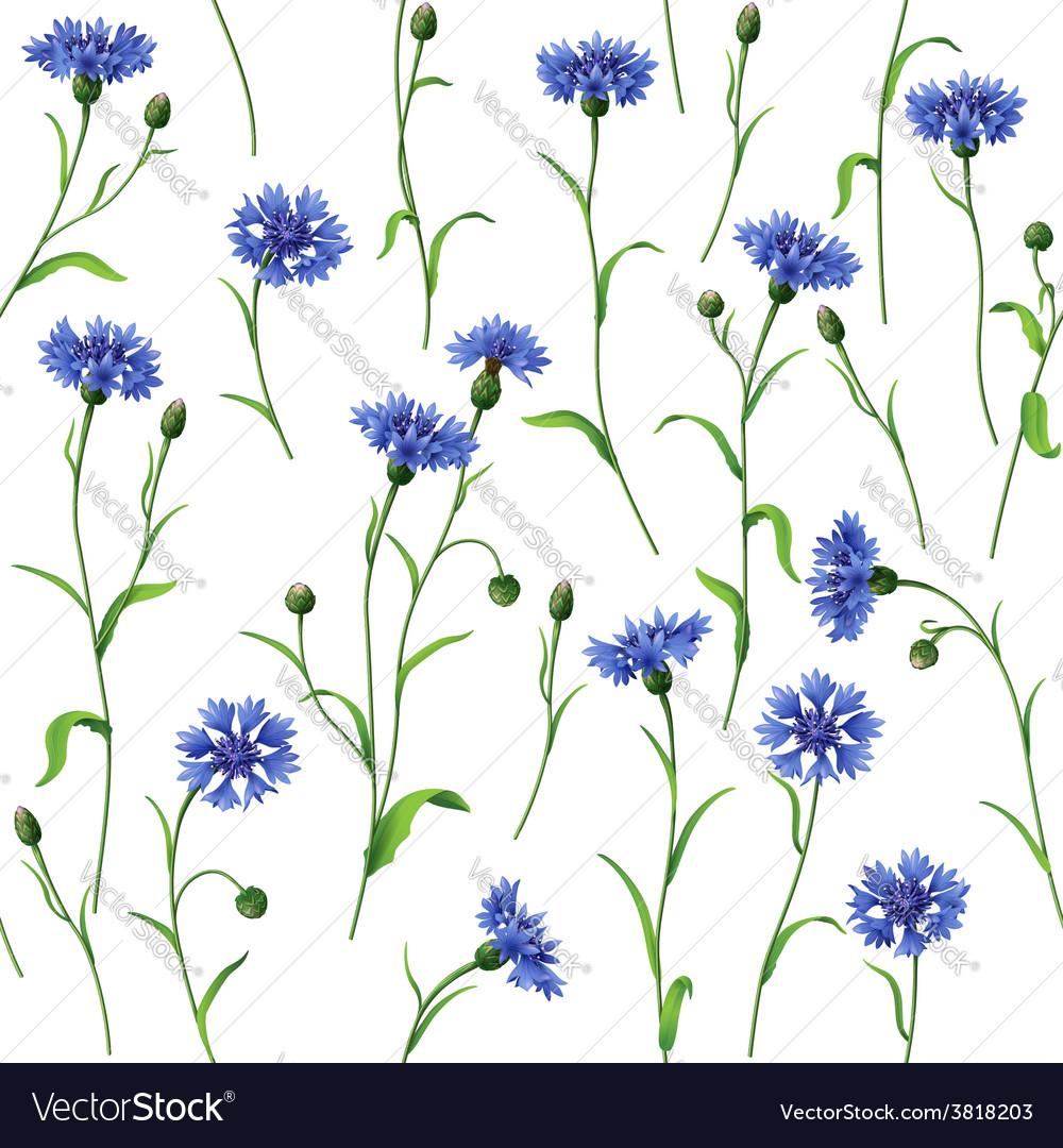Cornflower pattern vector | Price: 1 Credit (USD $1)