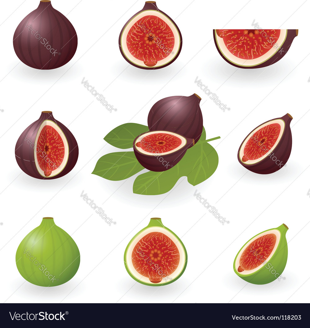 Figs vector | Price: 1 Credit (USD $1)