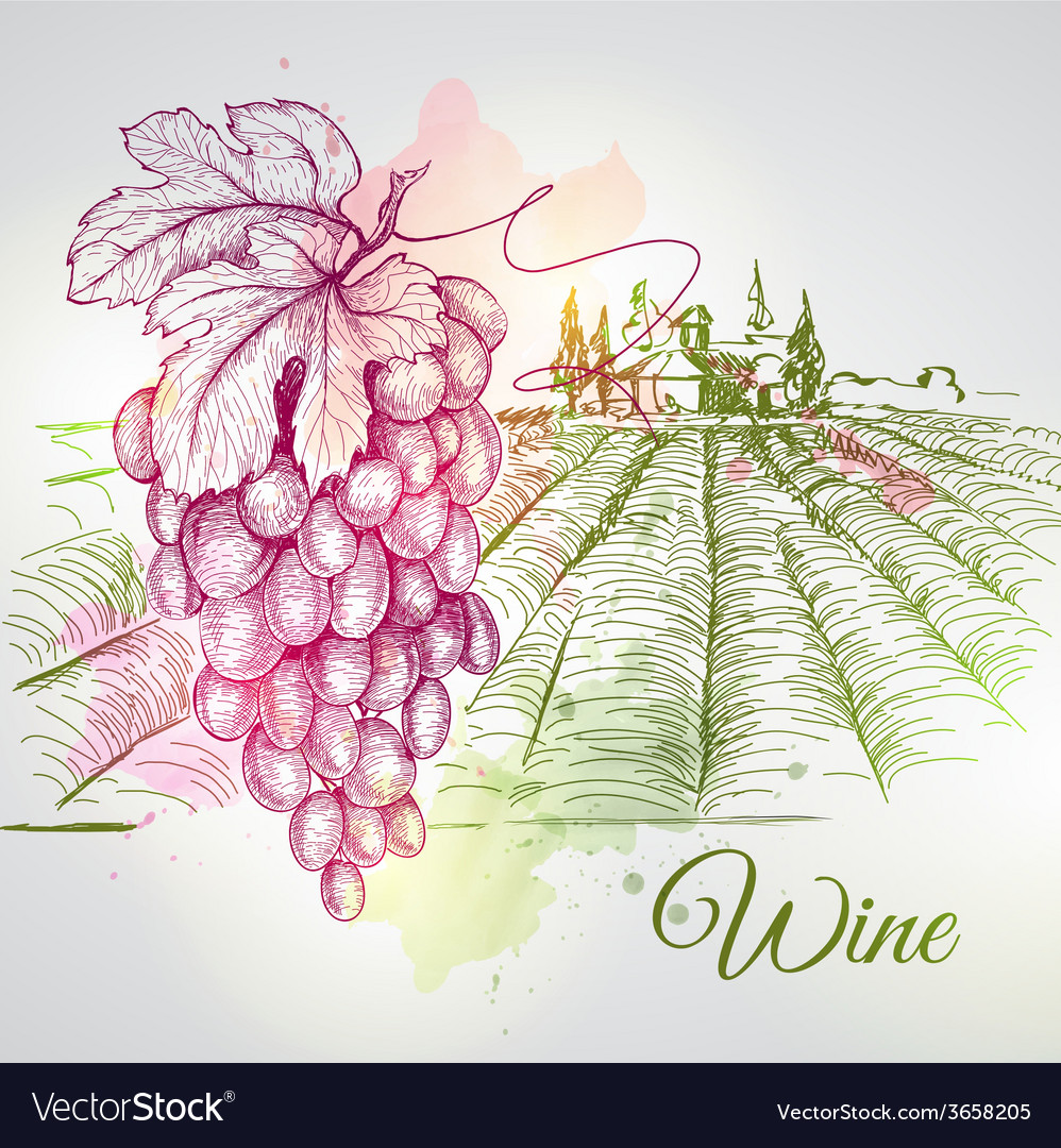 Hand drawn wine background vector | Price: 1 Credit (USD $1)