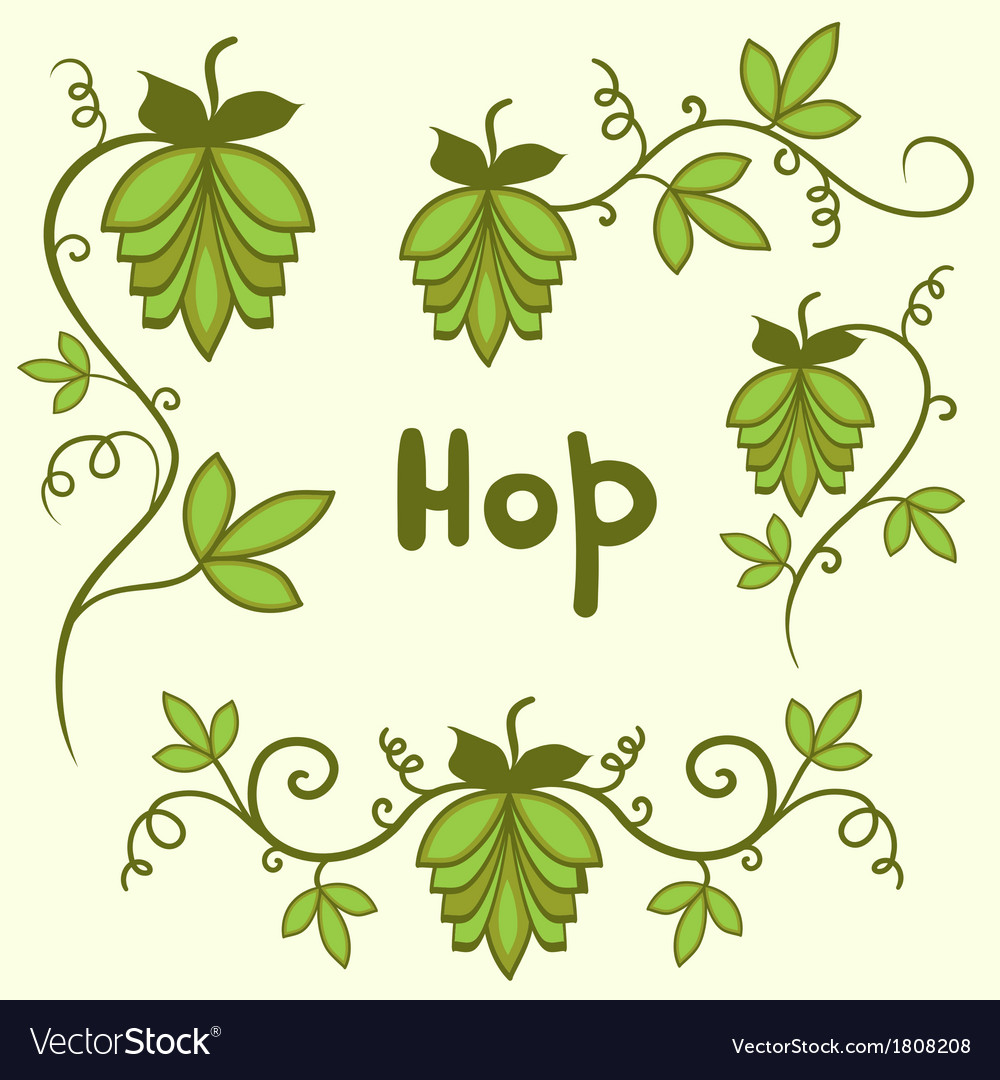 Stylized hops set vector | Price: 1 Credit (USD $1)