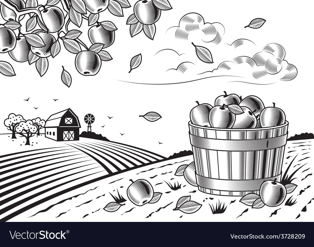 Apple harvest landscape black and white vector | Price: 3 Credit (USD $3)