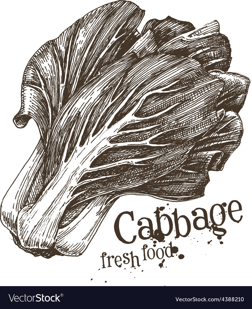 Cabbage logo design template fresh vector | Price: 3 Credit (USD $3)