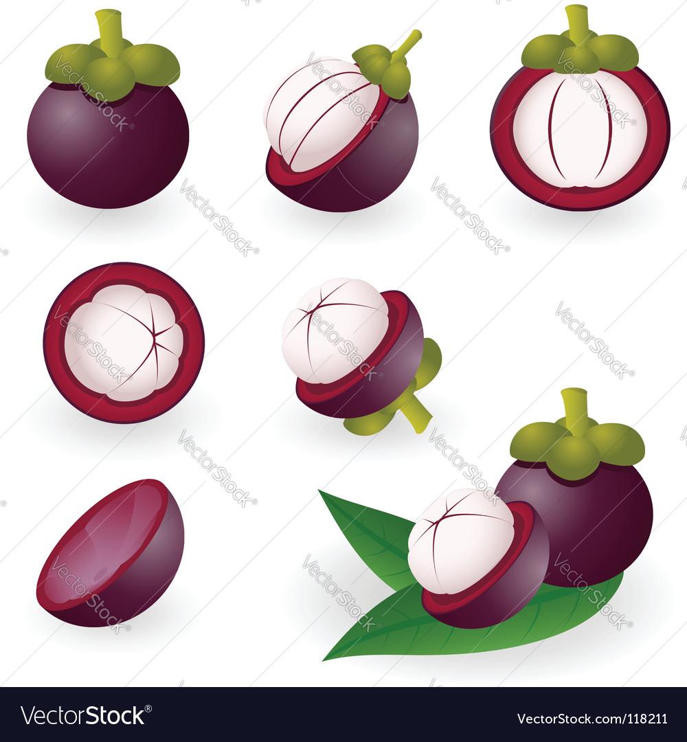 Mangosteen vector