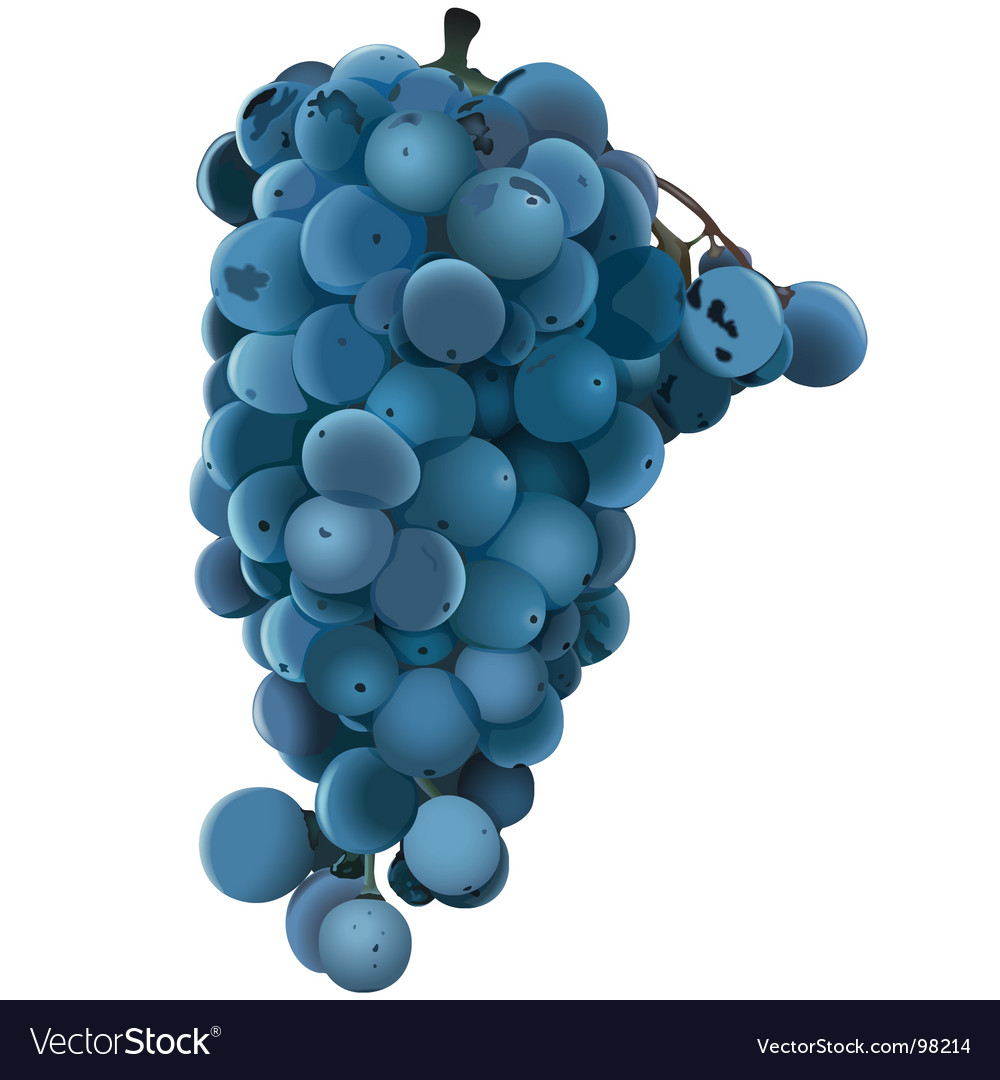 Blue grape vector | Price: 1 Credit (USD $1)
