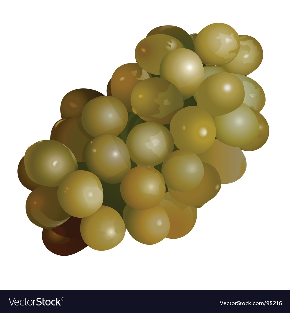 Green grape vector | Price: 1 Credit (USD $1)