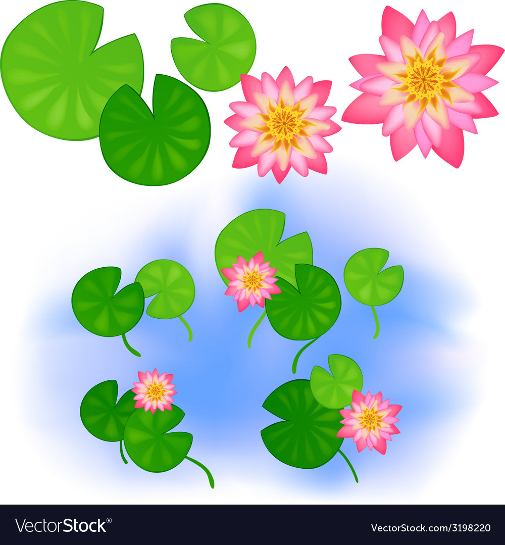 Lotus with leaves vector | Price: 1 Credit (USD $1)
