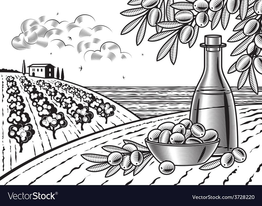 Olive harvest landscape black and white vector | Price: 3 Credit (USD $3)