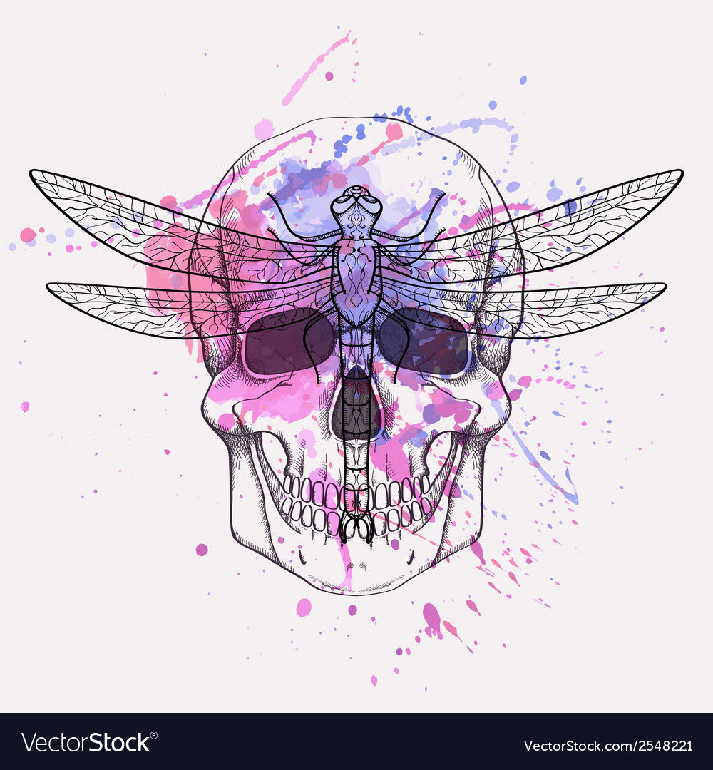 Grunge of human skull and dragonfly with wat vector | Price: 1 Credit (USD $1)