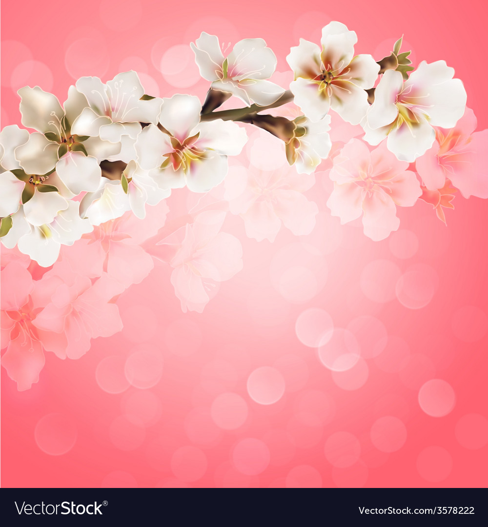 Blooming tree branch with pink flowers on bokeh vector | Price: 1 Credit (USD $1)