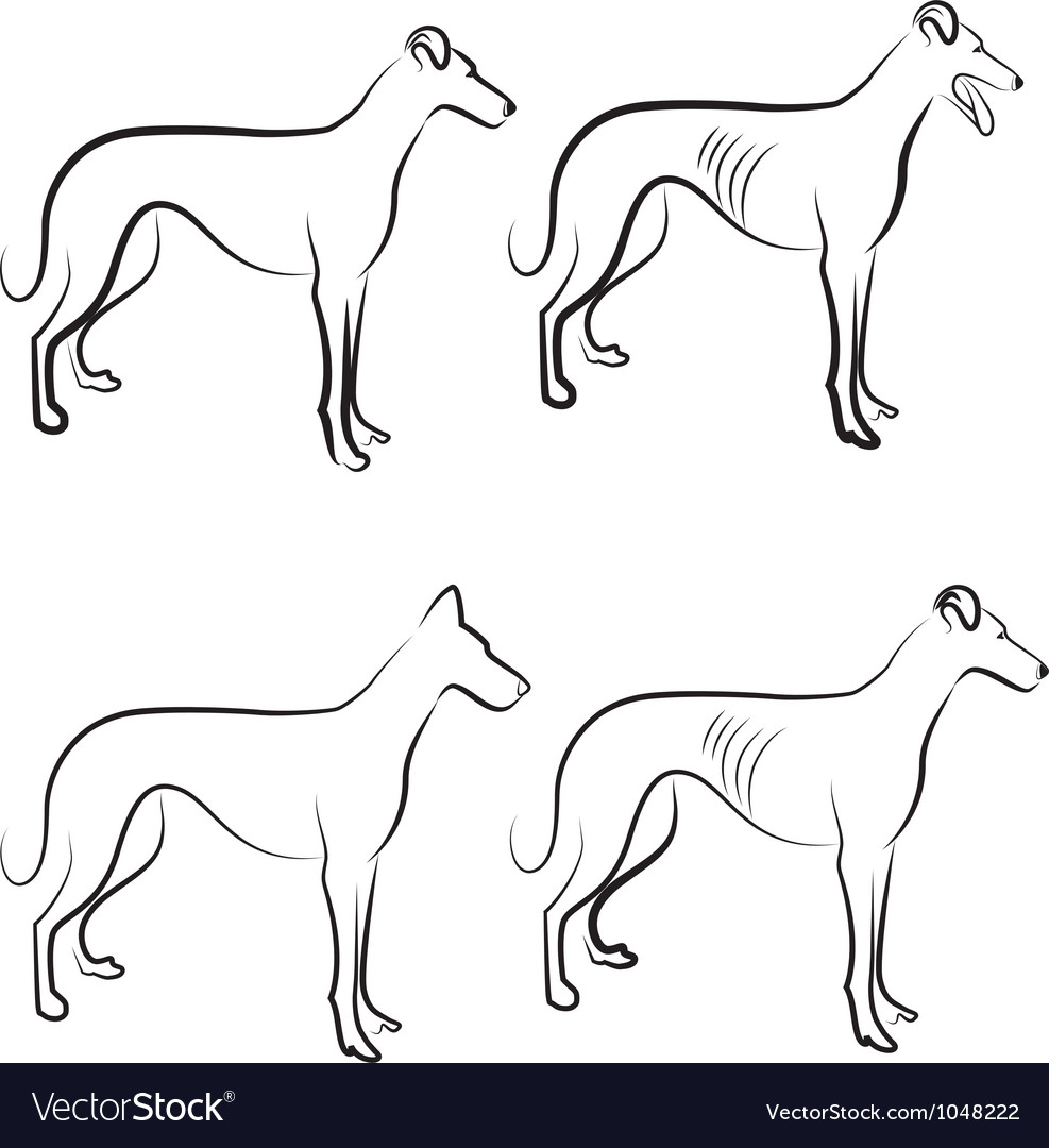 Greyhound dogs logo vector | Price: 1 Credit (USD $1)
