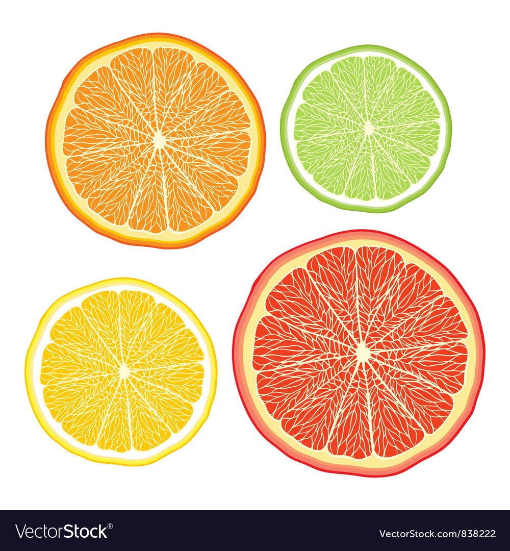 Stylised orange lemon grapefruit lime on white vector | Price: 1 Credit (USD $1)
