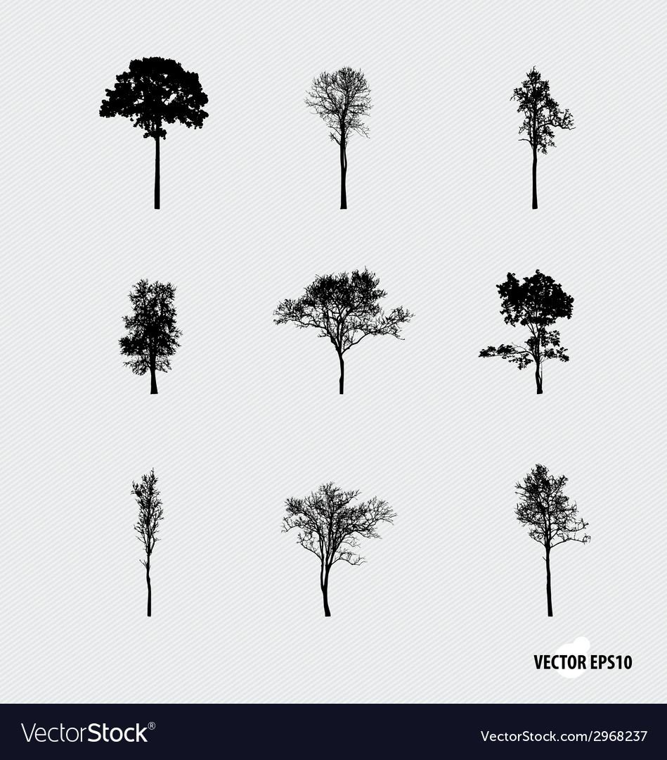 Set of tree silhouettes vector | Price: 1 Credit (USD $1)