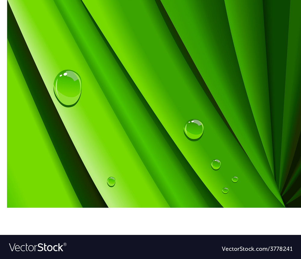 Dew on grass vector   Price: 1 Credit (USD $1)