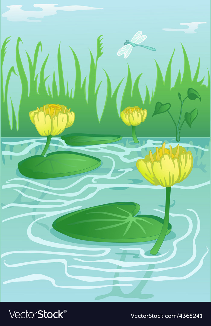 Yellow water-lilies in calm water vector | Price: 3 Credit (USD $3)